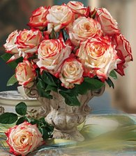 Parfum-Rose 'Impératrice Farah®'