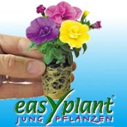 easyplant® Jungpflanzen